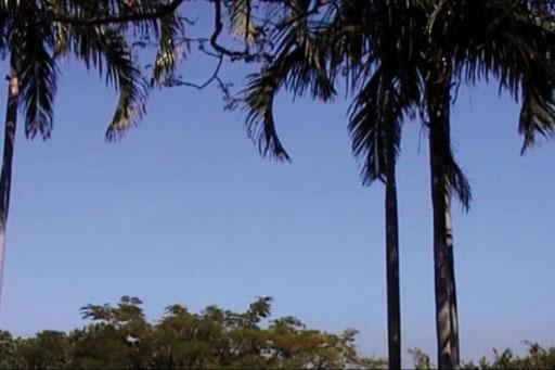 Darwin, 2000 (vidéogramme) © Jean-Pierre Bertrand